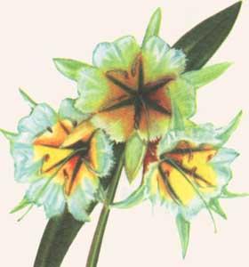 Edenland  интернетмагазин экзотических семян и растений